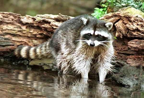 © audubonportland