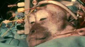 monkey-head-transplant2