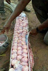 eggs-of-snake-2-700x1024